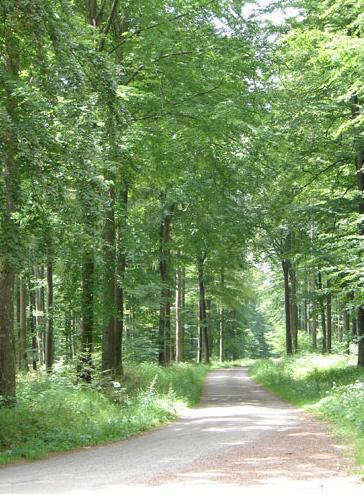 Cherimont forest